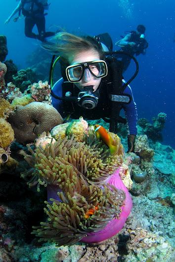 שושנת ים ורדרדה עם ליצני ים מתוקים