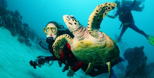 מסע בלתי נשכח באיי פלאו – חלק שלישי ואחרון – Palau Islands